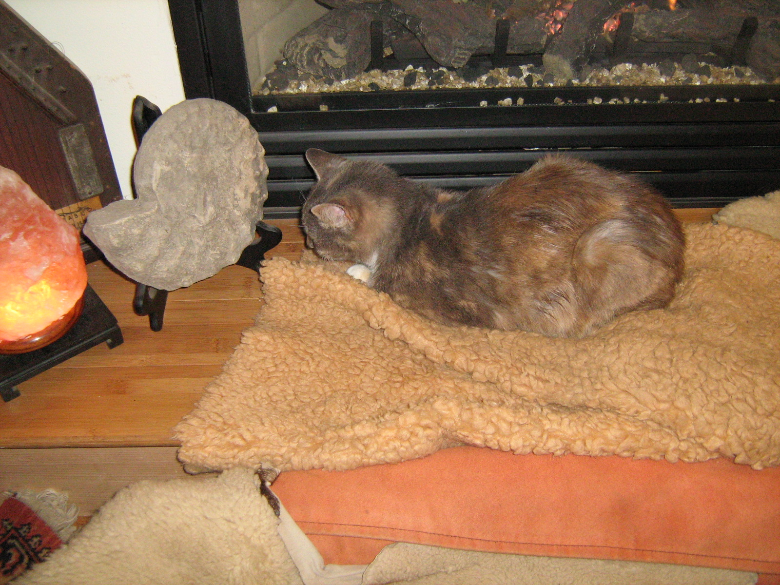 Frida on her bed in front of the fireplace.
