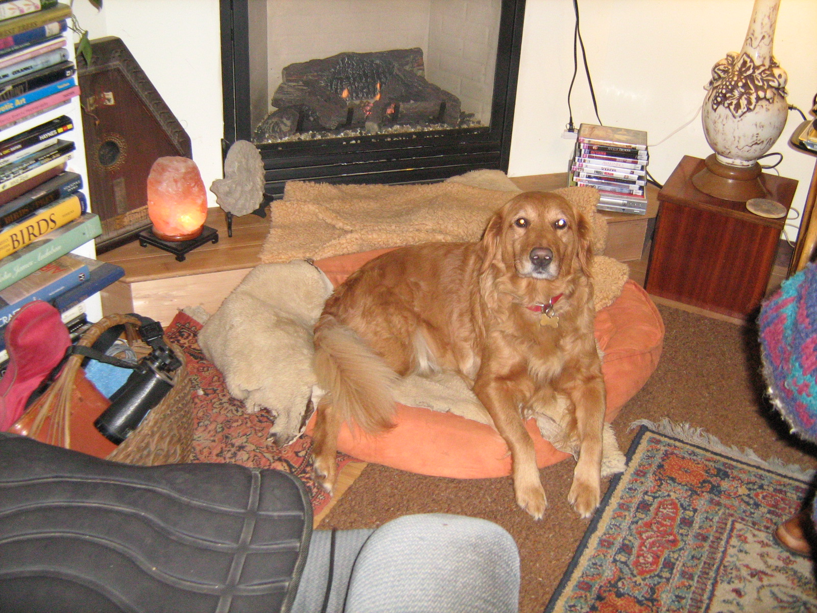 Rosie on her bed in front of the fireplace.
